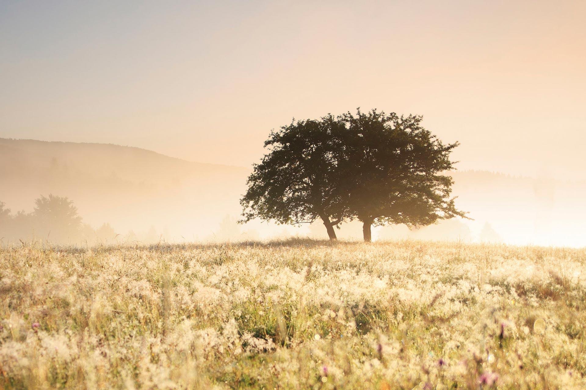 paisaje con 2 árboles, Especialistas en relaciones de Parejas